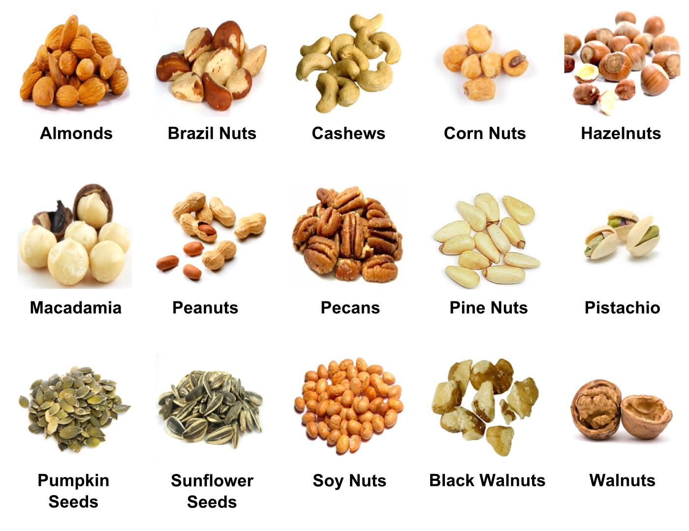 nuts-vocabulary