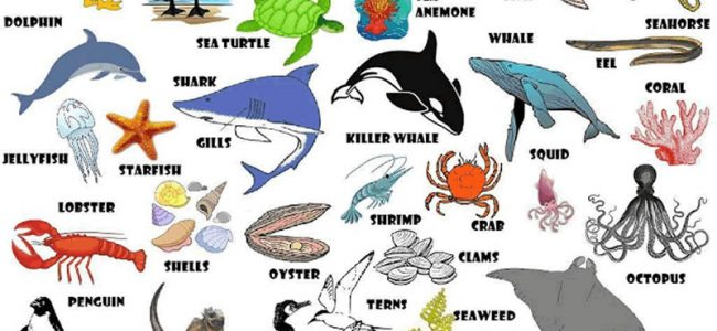 sea-animals