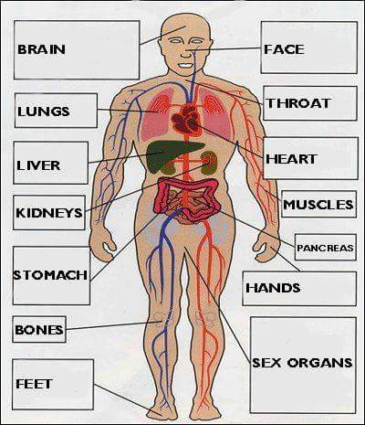 the-body-parts-english-vocabulary-8